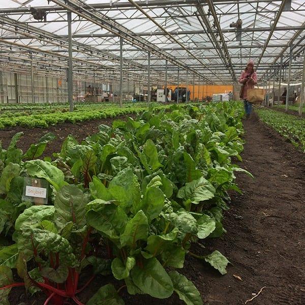 groente kweken bij Wij Telen Groente