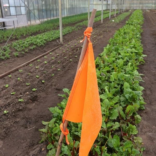 Groente kweken bij Wij Telen Groente in de Haarlemmer Kweektuin