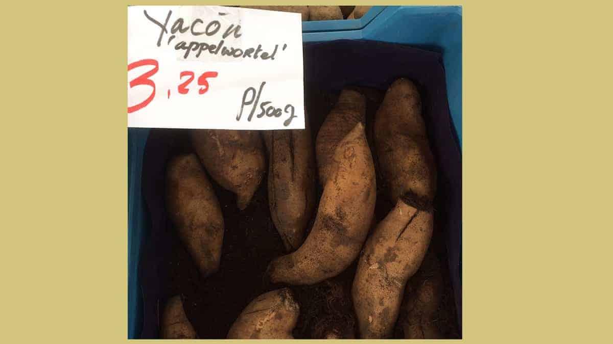 Yacon ovenschotel met gewone en zoete aardappel [recept]