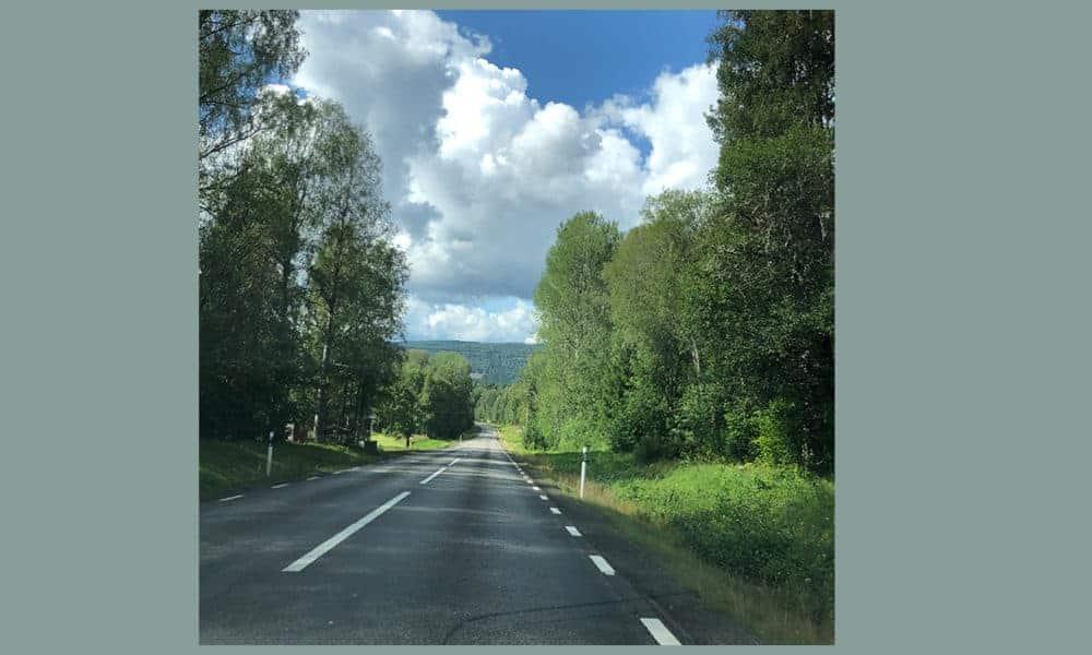 De weg in Lapland met bomen, bomen en nog eens bomen