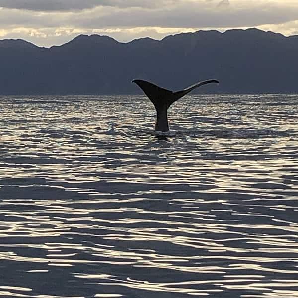 Er wonen potvissen in de wateren voor de kust van Kaikoura op het Zuidereiland van Nieuw Zeeland