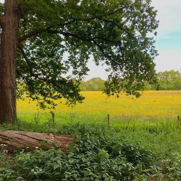 Beeckestijn in Velsen-Zuid, heerlijk om te wandelen