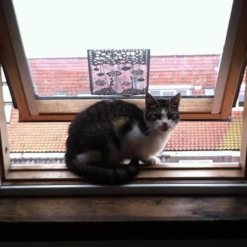 Onze kat Heintje was ziek, maar nu niet meer. Wat hebben we gedaan?