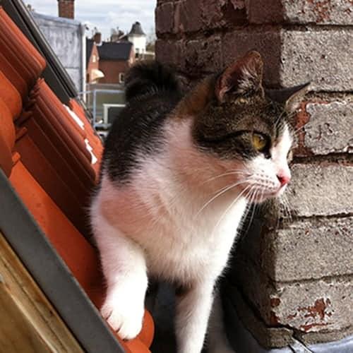 Onze kat Heintje op het dak