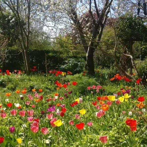 Haarlemmer Kweektuin is een kleine wandeltuin in Haarlem