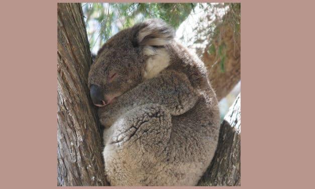 Reis door Australië met een camper