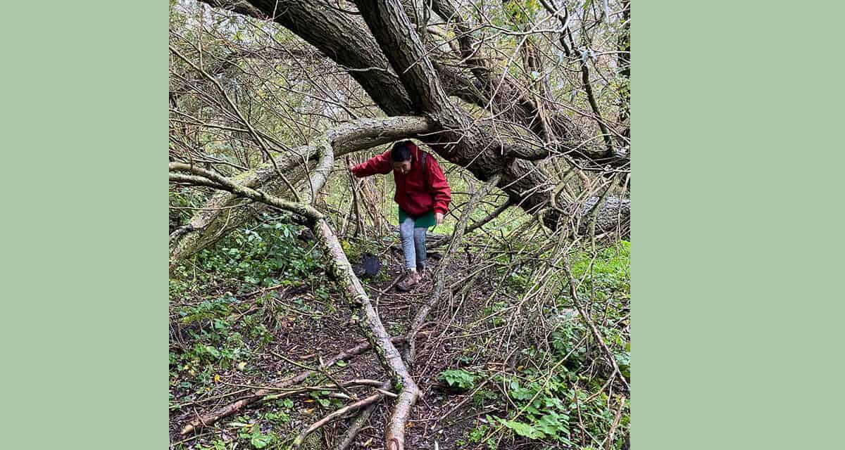 Het Geuzenbos in Halfweg: verrassend en prachtig eenvoudig