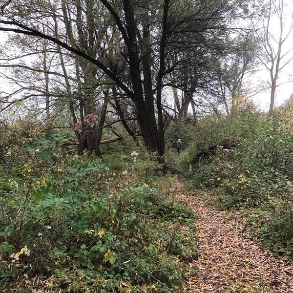 Het Geuzenbos in Halfweg