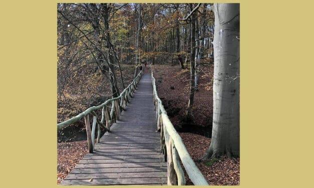 wandelen rondom Haarlem: Ontdek de 15 mooiste plekken!