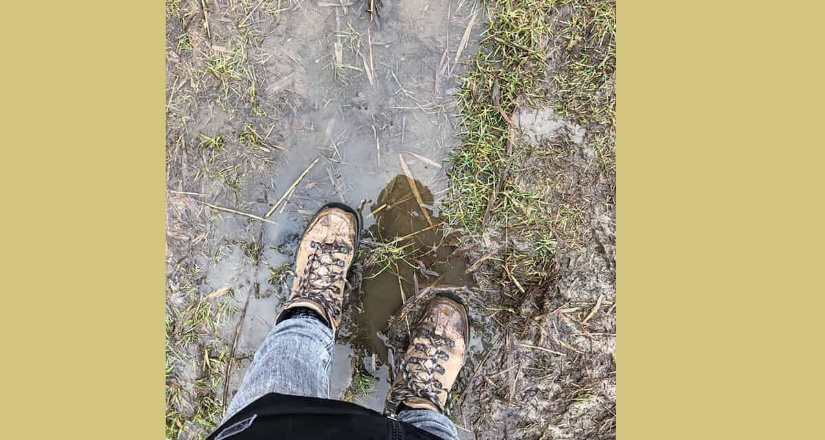 Wandelen in Brabant: een overzicht van 7 wandelgebieden