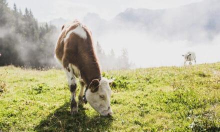 Wandelen in de bergen in veelzijdig Tirol