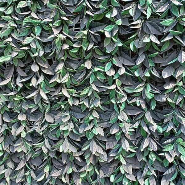 De muur van een schaduwrijke patio kun je bekleden met kunstplanten